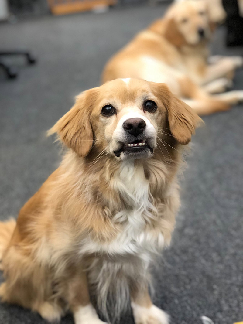 Charlie, one of our office dogs